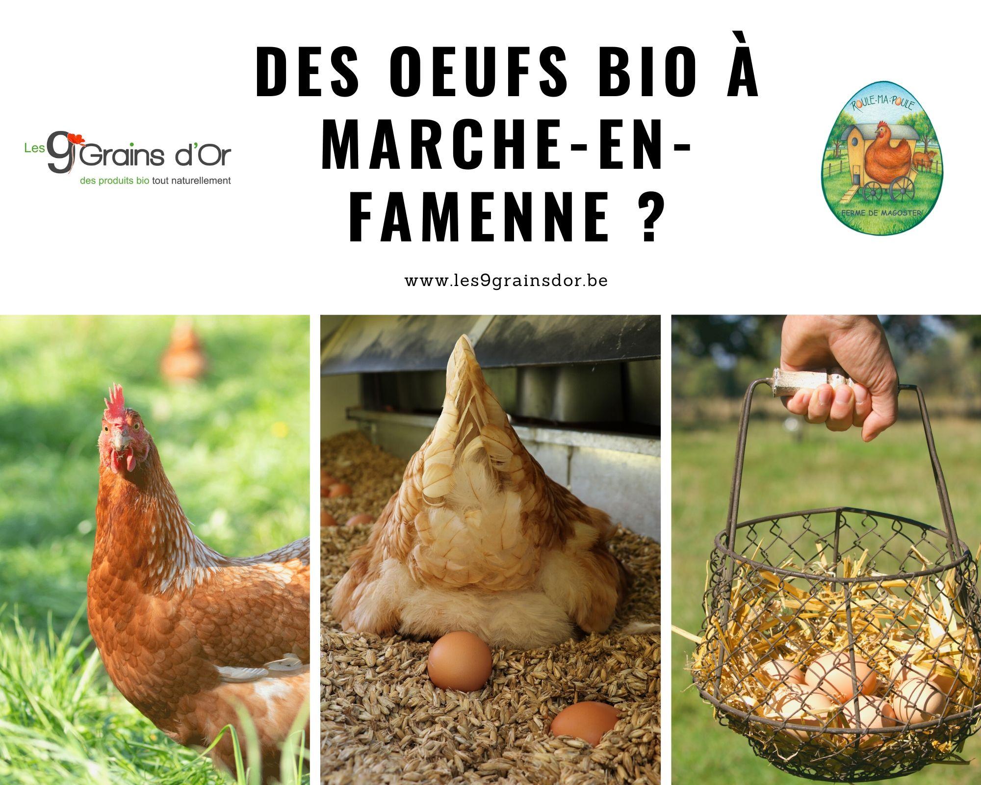 Oeufs bio Marche-en-Famenne